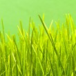 Green grass — Stock Photo #3574007