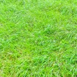 Big grass — Stock Photo