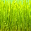 Grass — Stock Photo #3602644