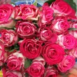Pink roses — Stock Photo #3612026