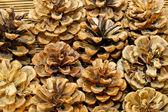 Brown cones — Stock Photo