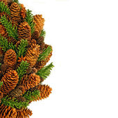 Pinecone square — Stock Photo