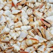 Royalty-Free Stock Photo: Bunch of shells