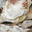 Royalty-Free Stock Photo: Oyster shell