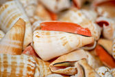 Small shell — Stock Photo