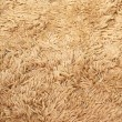 Merino rug — Stock Photo #3634557
