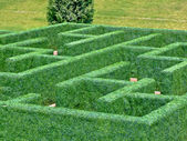 Maze garden — Stock Photo