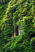 Window in green — Stock Photo