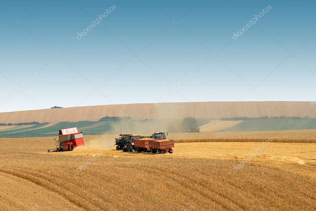 Wheat harvest in the big agricultural field — Stock Photo #3634885