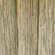 Stock Photo: Reed rattan