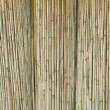 Reed rattan — Stock Photo #3675097