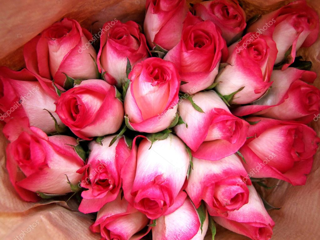 Bunch of vibrant pink roses flowers background — Stock Photo #3706492
