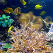 Coral life — Stock Photo #3751418