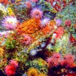 Coral reef — Stock Photo #3751421