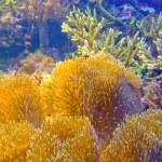 Coral sponge — Stock Photo #3751435