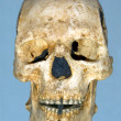 Stock Photo: Scull