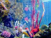 Mor mercan — Stok fotoğraf