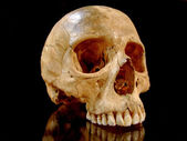 Scull profile — Stock Photo