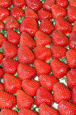 Strawberries sort — Foto Stock