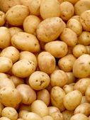 Organic potatoes — Stock Photo