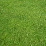 Golf grass — Stock Photo #3796748
