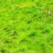 Bushy grass — Stock Photo #3825401