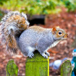 Squirrel at fence — Stock Photo