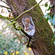 Squirrel at tree — Stock Photo