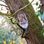 Squirrel at tree — Stock Photo