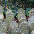 Stock Photo: Pet graveyard