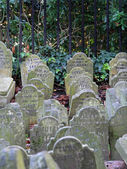 Pet graveyard — Stock Photo