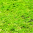 Grass bush — Stock Photo #3888787