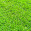 Stock Photo: Medium grass