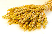 Wheat sheaf — Stock Photo