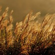 Wild Grasses — Stock Photo