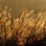 Wild Grasses — Stock Photo