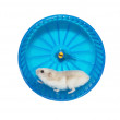 Hamster in the wheel — Stock Photo #2805389