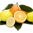 Stockfoto: Citrus fruits