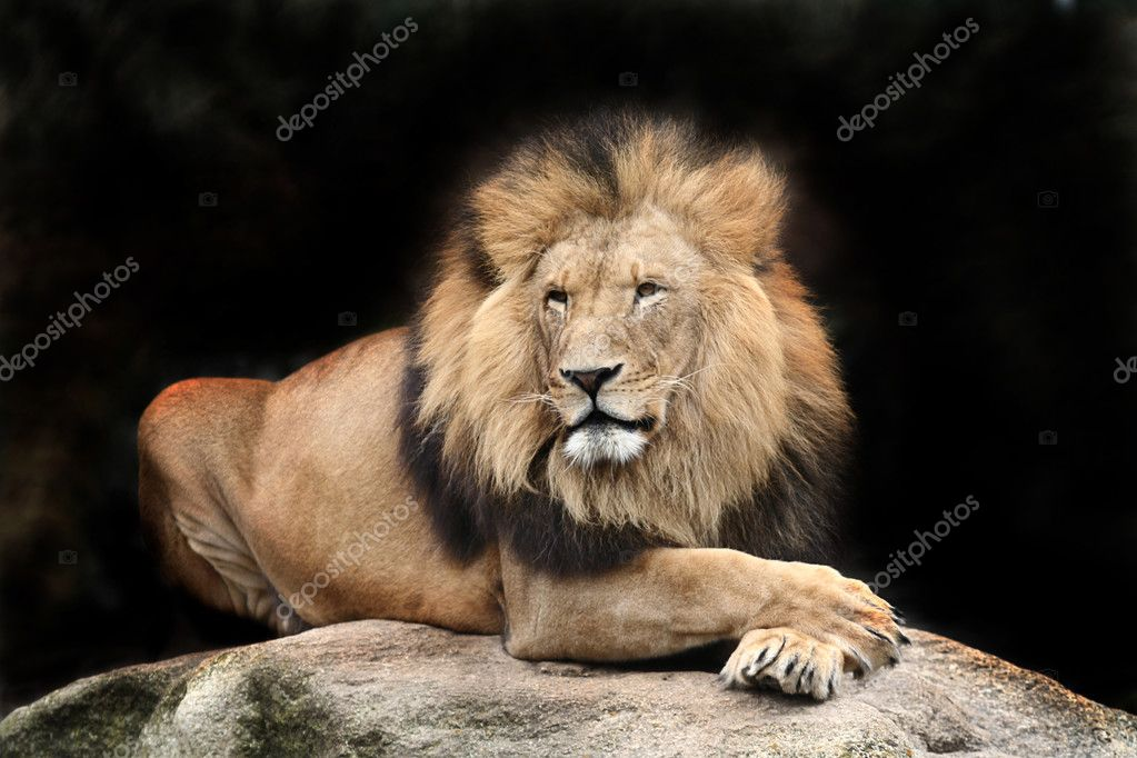 Portrait of a big male African lion — Stockfoto #2731429