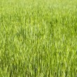 Green grass — Stock Photo #2710403