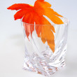 Maple leaf in a glass — Stock Photo