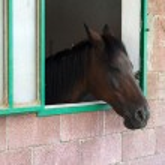 Horse — Stock Photo #2712360