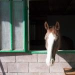 Horse — Stock Photo #2712376