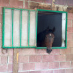 Horse — Stock Photo #2712384