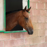 Horse — Stock Photo #2715985