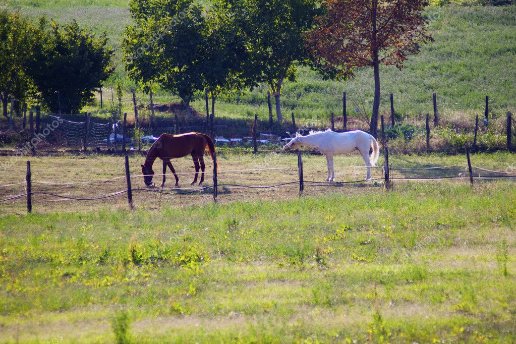 Brown horse and white horse in a fence — Stock Photo #2729986