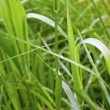 Stock Photo: Blade of grass