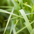 Blade of grass — Stock Photo #3030620