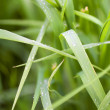 Blade of grass — Stock Photo