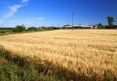 Landscape of field — Stock Photo
